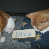Top 5 Must See Divas Before I Die Bucket List